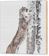 Cougars Tree Wood Print