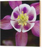 Coumbine Blossom Wood Print