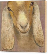 Country Charms Nubian Goat With Bright Eyes Wood Print