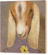 Country Charms Nubian Goat With Daisy Wood Print