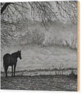 Country Horse Wood Print