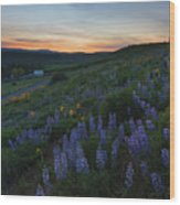 Country Meadow Sunset Wood Print