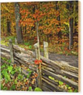 Country Road In Autumn Forest Wood Print
