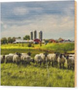 Country Sheep Wood Print