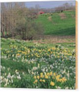 Country Spring Wood Print by Bill Wakeley