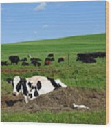 Countryside Cows Wood Print