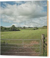 Countryside In Wales Wood Print