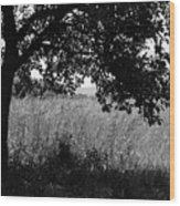 Countryside Of Italy Bnw Wood Print
