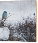 Couple Chilly Bluebirds Wood Print