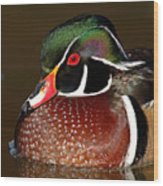 Courtship Colors Of A Wood Duck Drake Wood Print
