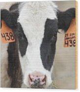 Cow 438 Wood Print