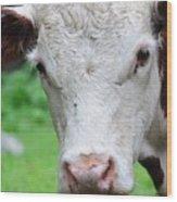 Cow 6856 Wood Print