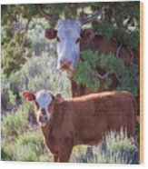 Cow And Calf Wood Print