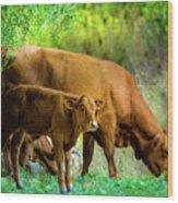 Cow And Calf Wood Print