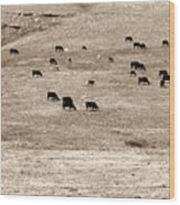Cow Droppings Wood Print