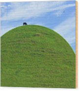 Cow Eating On Round Top Hill Wood Print