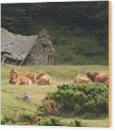 Cow Family Pastoral Wood Print