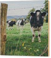 Cow Herd Wood Print