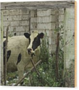 Cow In A Building Wood Print