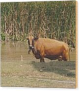Cow In The Field Wood Print