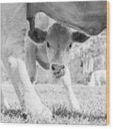 Cow Milk Wood Print