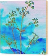 Cow Parsley Blossom 2 Wood Print