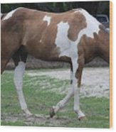 Cow Spotted Horse Wood Print