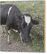 Cow Tow Wood Print