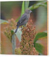 Cowbird Feasting On Milo And Shiloh Military Park In Tennessee Wood Print