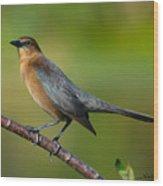 Cowbird Wood Print