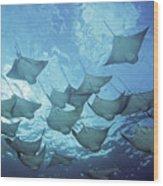 Cownose Rays Wood Print