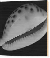 Cowry Shell In Black And White Wood Print