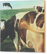 Cows 2 Wood Print