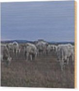 Cows And Cows Wood Print