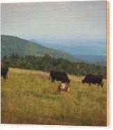 Cows At Doughton Park Wood Print