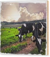 Cows At Sunset Bordered Wood Print