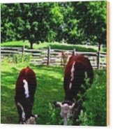 Cows Grazing Wood Print