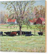 Cows Grazing In One Field  Wood Print
