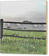 Cows In Field Wood Print