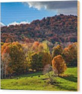 Cows In Pomfret Vermont Fall Foliage Wood Print
