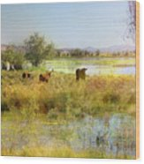 Cows In The Desert Wood Print