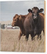 Cows In The Fall Pasture Wood Print