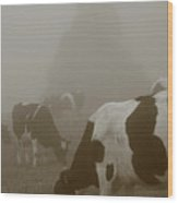 Cows In The Mist Wood Print