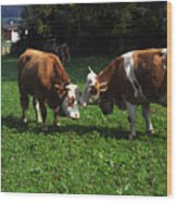 Cows Nuzzling Wood Print