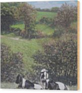 Cows Sitting By Hill Relaxing Wood Print