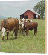 Cows8939 Wood Print
