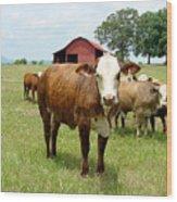 Cows8944 Wood Print