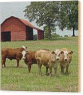 Cows8954 Wood Print