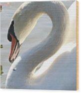 Coy Swan Wood Print