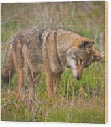 Coyote Wood Print by Carl Jackson